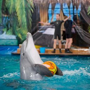 Дельфинарии, океанариумы Петровского