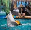 Дельфинарии, океанариумы в Петровском